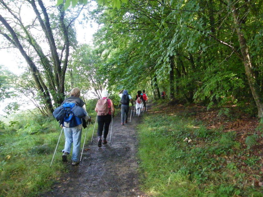 Marche Nordique dans les bois de la région de Rennes